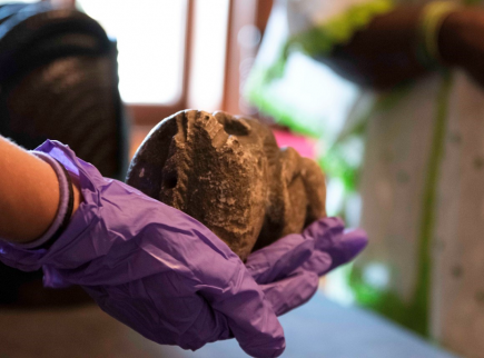An artefact is held in a hand wearing a purple glove