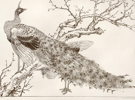 A print featuring a peacock as the focus and a tree branch in the background